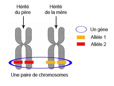 daltonisme genetique